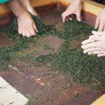 府立宇治公園「橘島、塔の島」で「宇治茶まつり」に参加してきました!